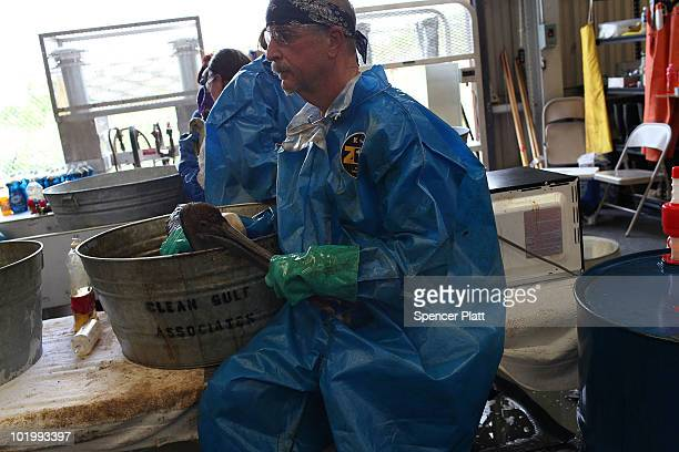 A worker holds a pelican while it is cleaned of oil at the Fort Jackson Oiled Wildlife Rehabilitation Center on June 11 2010 in Buras Louisiana It is...