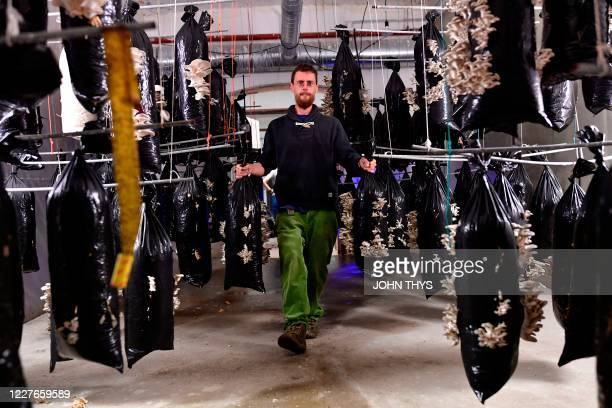 A worker holds bags of mushrooms produced by the company Permafungi which recycles coffee grounds to grow organic mushrooms in Brussels on July 15...