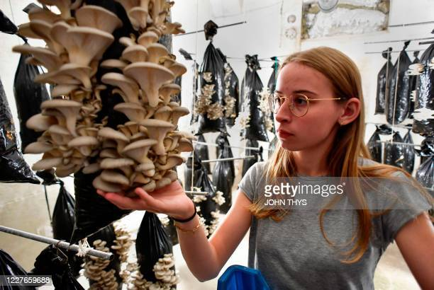 A worker holds mushrooms produced by the company Permafungi which recycles coffee grounds to grow organic mushrooms in Brussels on July 15 2020 In...