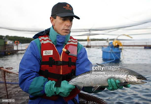 A worker holds up a salmon at the Salmones Pacific Star SA salmon farm off the coast of Chiloe Island near the town of Quellon Chile on July 14 2006