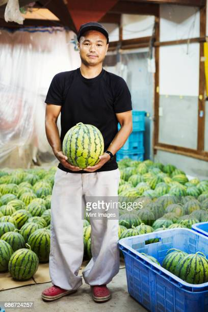 Worker in a greenhouse holding a watermelon.