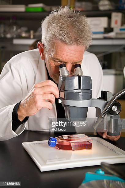 worker in a laboratory - rich_legg stock photos and pictures