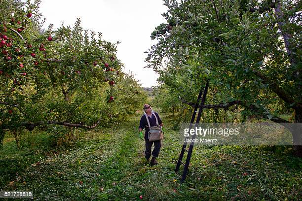 Worker in apple orchard