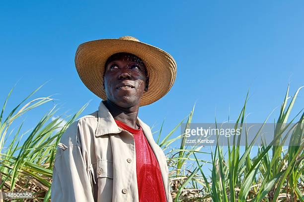 Worker in sugarcane field.
