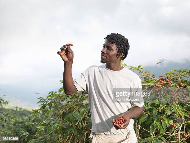 Worker Inspecting Coffee Beans