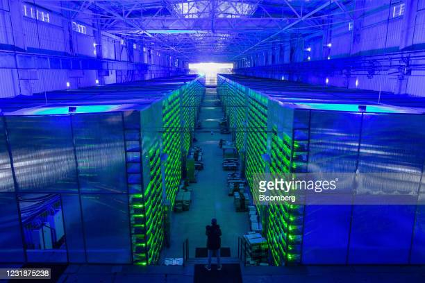 Worker inspects illuminated mining rigs operating inside racks at the CryptoUniverse cryptocurrency mining farm in Nadvoitsy, Russia, on Thursday,...