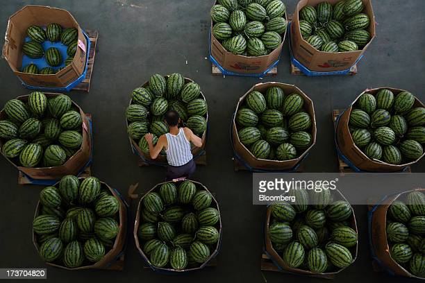 Worker inspects stacked watermelons at Noeun Agricultural and Marine Products Wholesale Market in Daejeon, South Korea, on Tuesday, July 16, 2013....