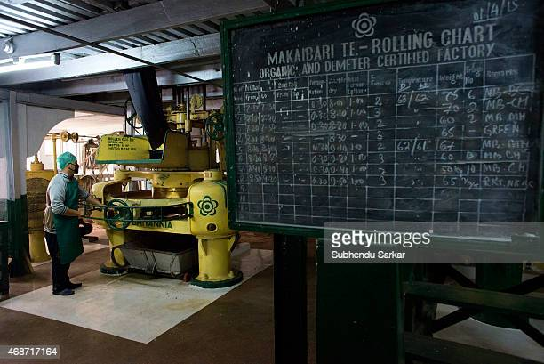 A worker inspects tea leaves being rolled by a machine at Makaibari tea factory Set up in 1859 off Kurseong in the Darjeeling hills the Makaibari...