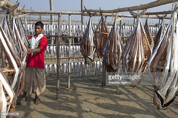 COX'S BAZAR BANGLADESH JANUARY 1 A worker is busy to drying fish under sun at Naziratek in Cox's Bazar on January 01 2016 Naziratek on the beach at...