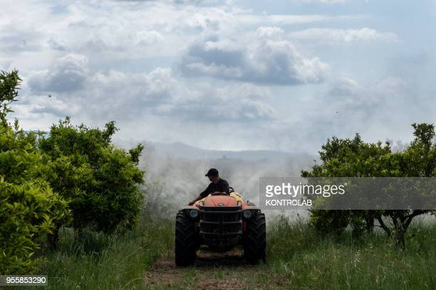 A worker is doing an antiparasitic treatment with pesticides on a farm The use of pesticides is being reduced all over the world as they pollute...