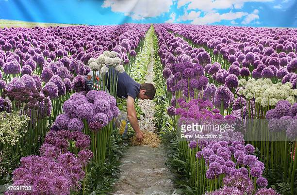 A worker lays hay amongst the flowers in a display backed with a large photographic backdrop at The Hampton Court Palace Flower Show on July 2 2012...
