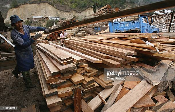 A worker lays wood in a wood factory at a village on March 17 2006 in Panwa Kachin State Special Region 1 of Kachin State Myanmar The Kachin State...