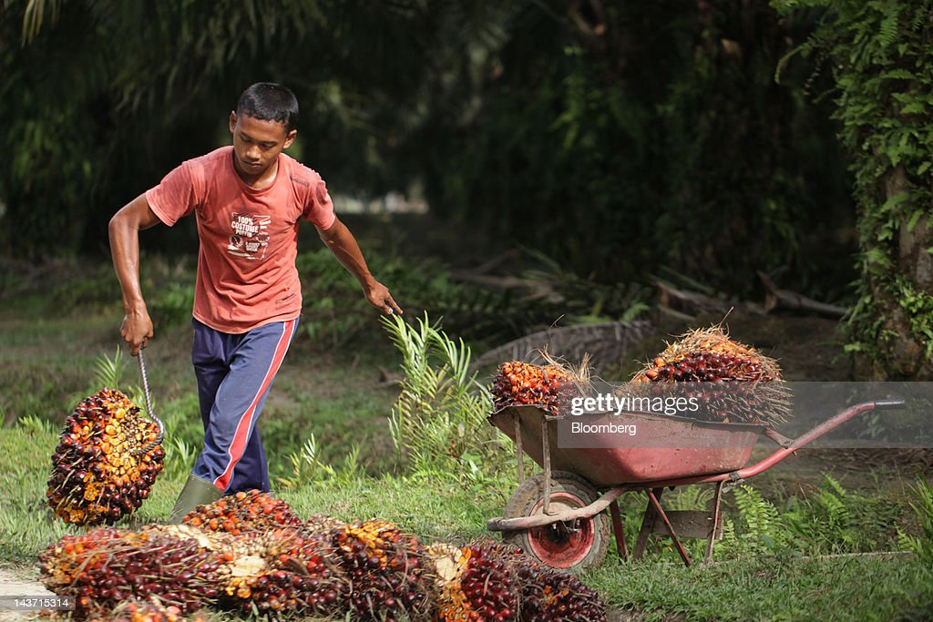 Images Of PT Bakrie Sumatera's Palm Oil, Rubber And Oleochemical Facilities : News Photo