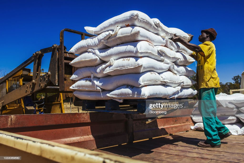 A worker loads sacks of livestock feed into a truck for shipping on the Ehlerskroon farm, outside Delmas in the Mpumalanga province, South Africa on Thursday, Sept. 13, 2018. A legal battle may be looming over plans by South Africas ruling party to change the constitution to make it easier to expropriate land without paying for it, with widely divergent views over the process that needs to be followed. Photographer: Waldo Swiegers/Bloomberg via Getty Images