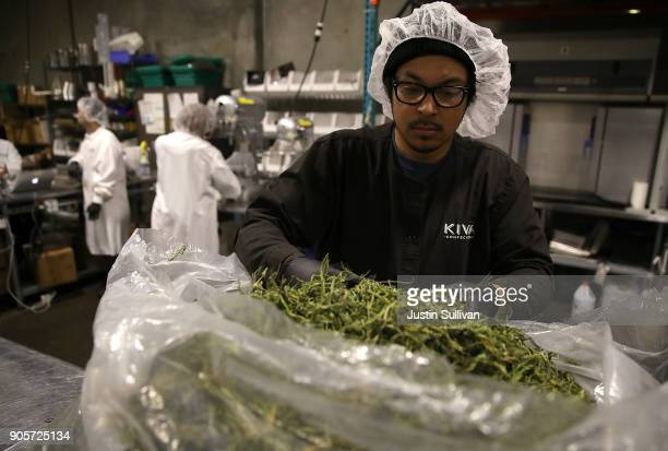 A worker looks through a bag of marijuana that will be used to make marijuana infused chocolate edibles at Kiva Confections on January 16 2018 in...