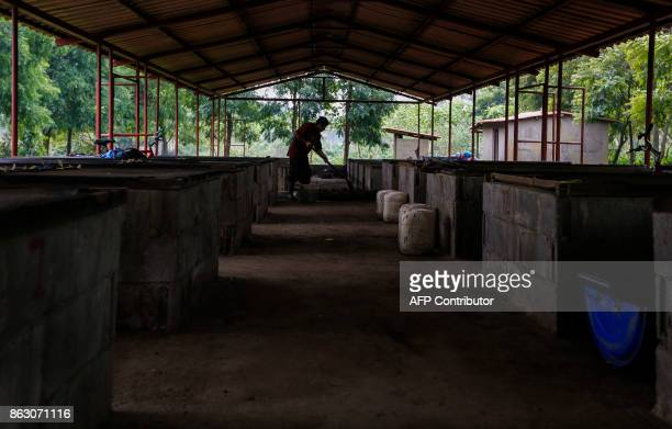 A worker makes organic fertilizer for new plants on the 'Santa Francisca' farm where coffee rust led to the cutting and burning of coffee trees and...
