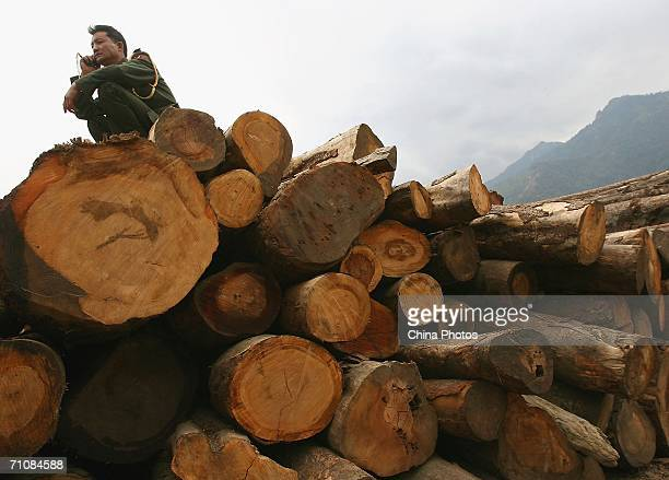 A worker makes phone call on logs in a wood factory at a village on March 17 2006 in Panwa Kachin State Special Region 1 of Kachin State Myanmar The...