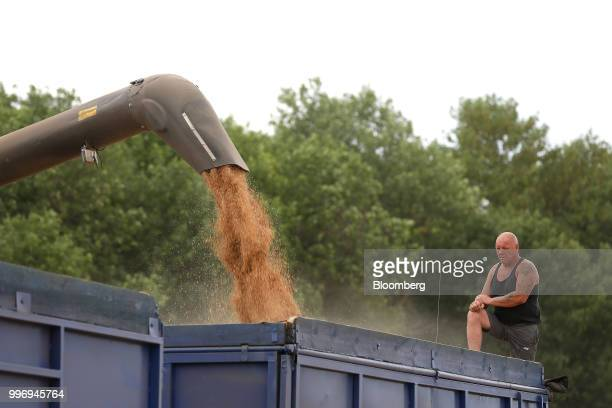 A worker monitors as harvested wheat grain is unloaded into a truck during the summer harvest on a farm operated by Ros Agro Plc in Kazinka village...