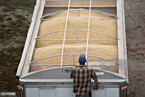 A worker monitors Monsanto Co Dekalb brand corn being loaded into a truck on a farm in Tiskilwa Illinois US on Friday Sept 30 2016 Monsanto is...