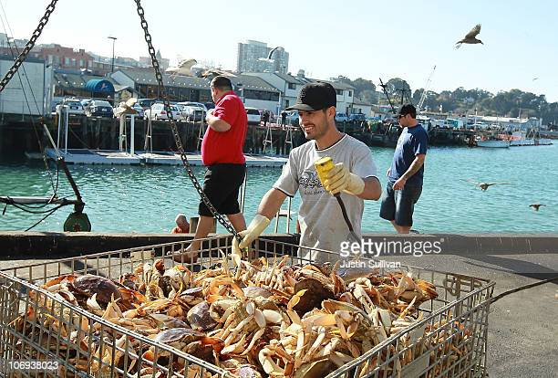 A worker moves a bin of Dungeness Crab after it was offloaded from a fishing vessel on November 17 2010 in San Francisco California After a brief...