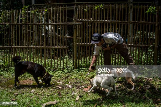 A worker of Jakarta Animal Aid Network feeding abandoned dogs at North Duda village on October 3 2017 in Karangasem regency Island of Bali Indonesia...