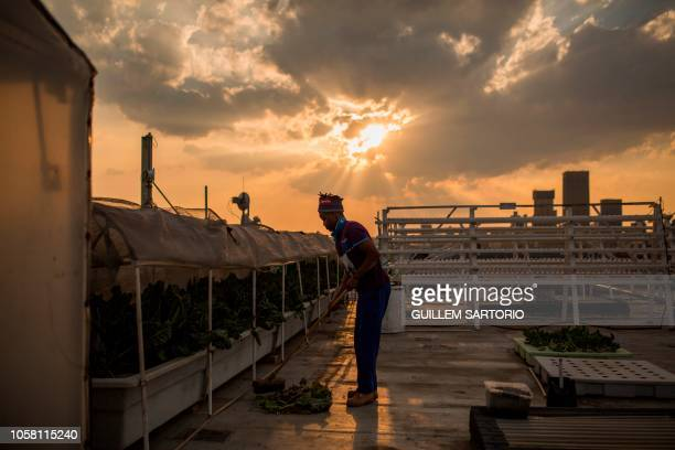 Worker of Rooftops Roots Thulani Shabangu swipes the floor at the end of the day in Johannesburg on November 2 2018 Rooftop roots aquaponics methods...