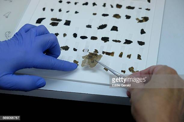 A worker of the Israeli Antiquity Authority sews fragments of the Dead Sea scrolls which includes biblical verses in a preservation laboratory of the...