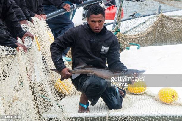 A worker of the Rova Caviar Madagascar company holds a sturgeon after pulling it from the net at the Acipenser factory on June 4 2019 in Mantasoa...