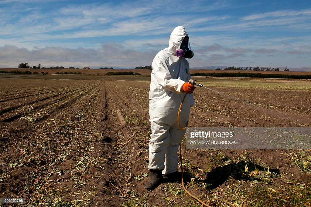 Worker on a farm, wears a Tyvek chemical protective suit as he sprays a field with a herbicide after the broccoli harvest. Herbicides are used to eliminate weeds that are left in the field and need to be eliminated before the next planting.