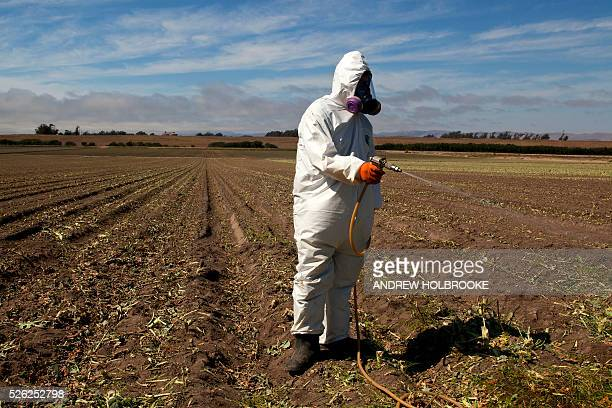 Worker on a farm wears a Tyvek chemical protective suit as he sprays a field with a herbicide after the broccoli harvest Herbicides are used to...
