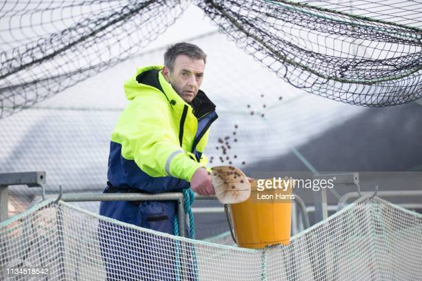 worker on salmon farm in rural lake - aquaculture stock pictures, royalty-free photos & images
