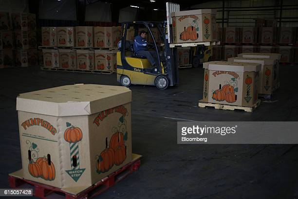 A worker operates a forklift to move crates of jacko'lantern pumpkins at a Frey Farms Inc processing facility Poseyville Indiana US on Thursday Oct...