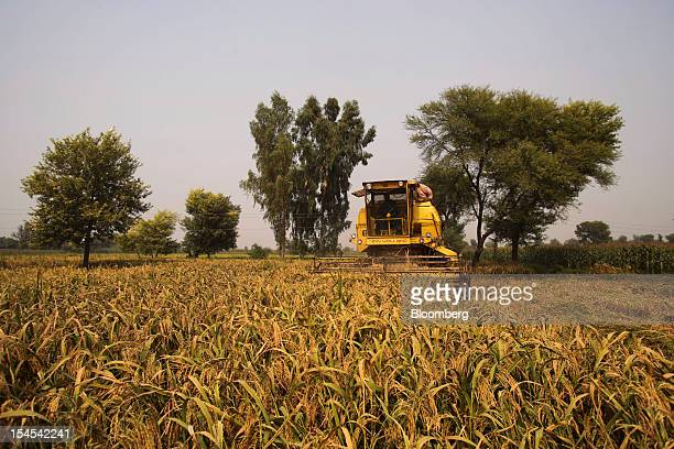 A worker operates a New Holland harvester to harvest rice in a paddy field in the Chiniot district of Punjab province Pakistan on Saturday Oct 13...