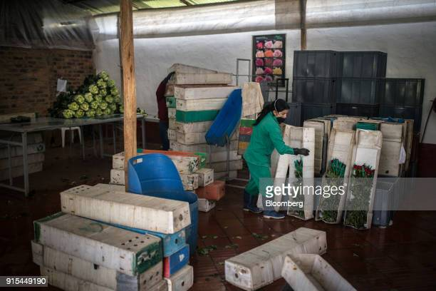 A worker organizes boxes for shipment at a rose packing facility in the town of Cogua Cundinamarca department Colombia on Monday Feb 5 2018 Through...