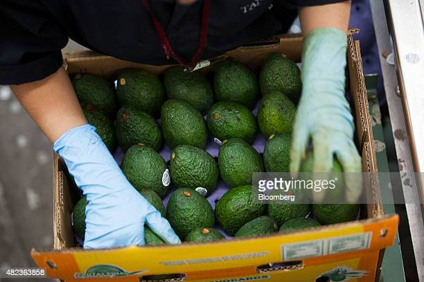 A worker packages avocados at the Frutas Finas de Tancitaro plant in Tancitaro Mexico on Wednesday July 22 2015 Avocados are the biggest agricultural...