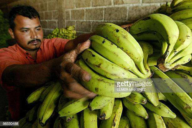 A worker piles up bunches of bananas at the warehouse of a market in Tegucigalpa 05 January 2006 The Honduran government will present a demand to the...