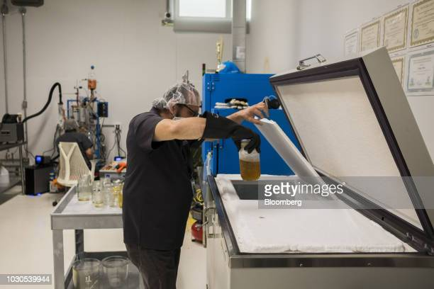 A worker places a cannabis extract jar into a container at the NextGen Pharma lab in Toa Baja Puerto Rico on Thursday July 19 2018 As Puerto Rico...