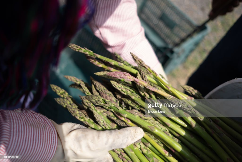 Asparagus Farm & Packing Facility As Influx Of Commodities From Mexico Turns U.S. Trade Dominance Upside Down
