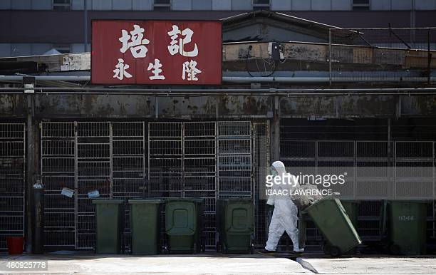 A worker prepares bins during a chicken cull in Hong Kong on December 31 after the deadly H7N9 virus was discovered in poultry imported from China...