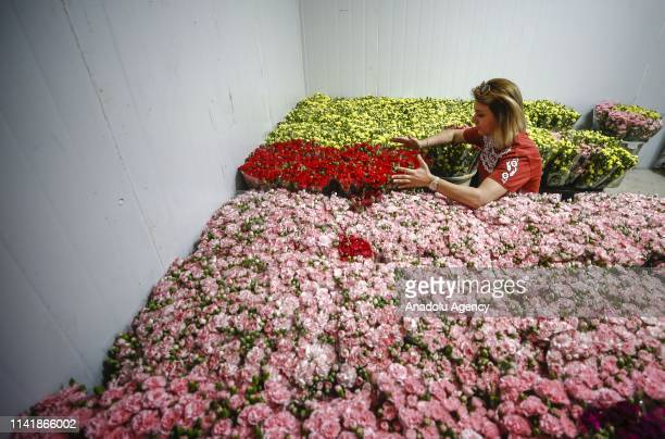 A worker prepares flowers for shipping ahead of the Mother's Day in Antalya Turkey on May 06 2019 Turkey expects 7 million dollars turnover from 45...