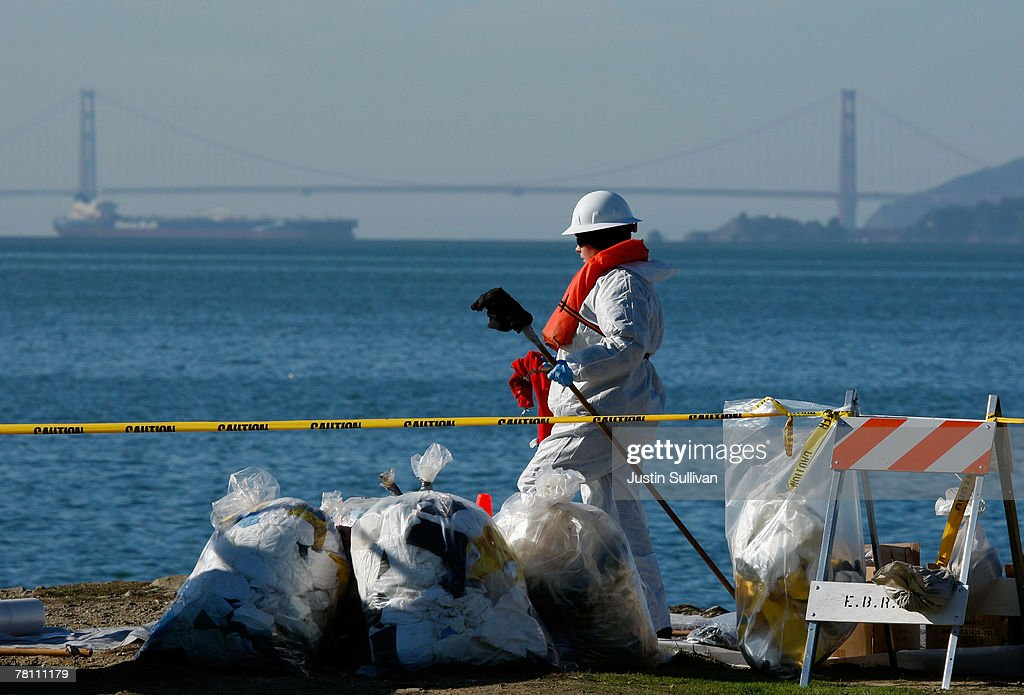 Bay Area Oil Spill Continues To Kill Thousands Of Birds : News Photo