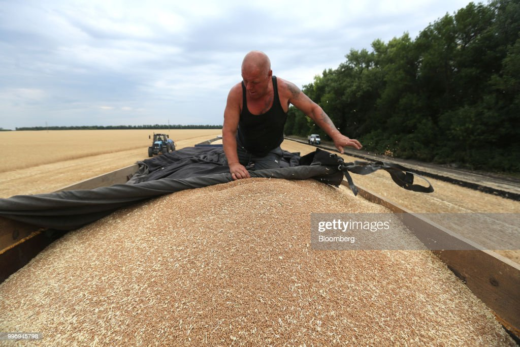 A worker pulls a tarpaulin cover over harvested wheat grain in a truck during the summer harvest on a farm operated by Ros Agro Plc, in Kazinka village, outside Belgorod, Russia, on Wednesday, July 11, 2018. Russian wheat has dominated sales to Egypt in recent years, accounting for 78 percent of total purchases in the 2017-18 season. Photographer: Andrey Rudakov/Bloomberg via Getty Images