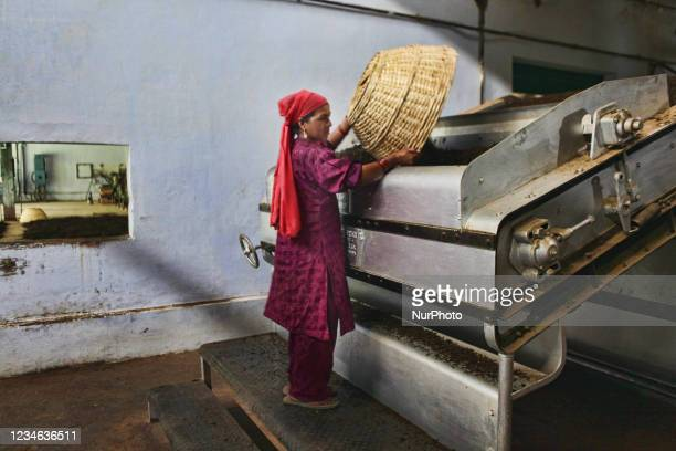 Worker puts dried tea leaves into a machine to sort the tea by grade and quality at the Baijnath Government Tea Factory in Baijnath, Himachal...