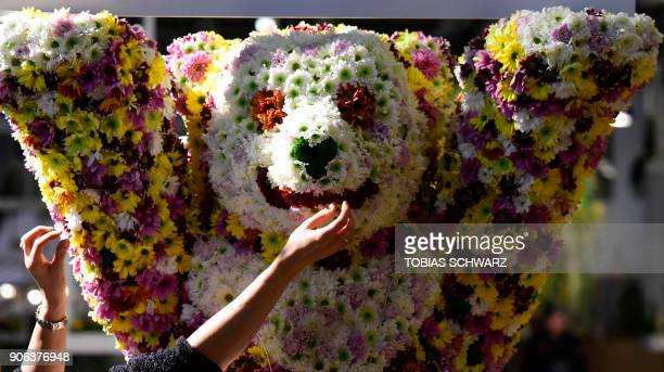 A worker puts the final touch on a flowercovered bear prior to the opening of the International Green Week agricultural fair in Berlin on January 18...