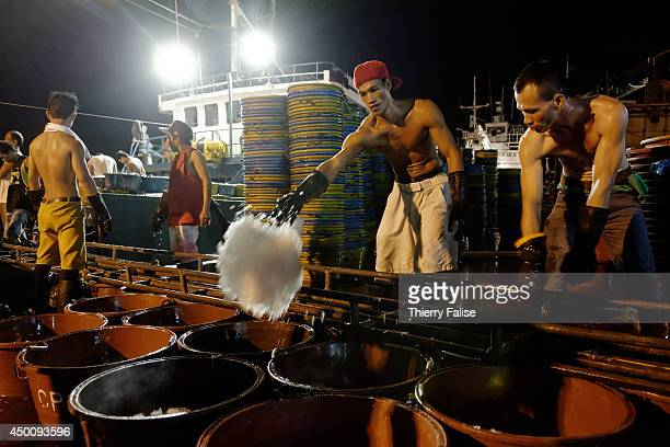 Worker recovers ice from a fish load at Navotas fishing port. Navotas is considered as the main fishing port of the Philippines. 70% of its...
