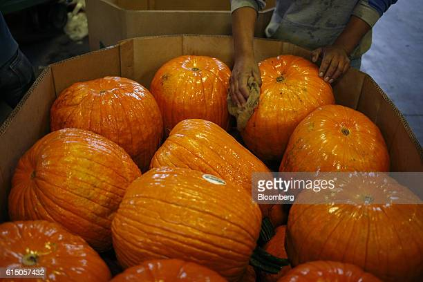 A worker removes dirt from newlyharvested jacko'lantern pumpkins at a Frey Farms Inc processing facility Poseyville Indiana US on Thursday Oct 13...