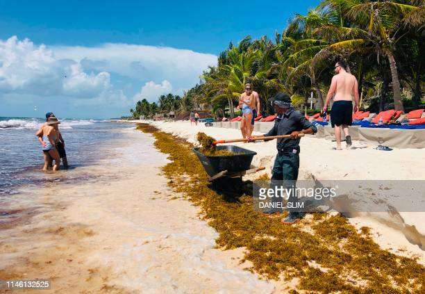 A worker removes Sargassum seaweed from the beach near Tulum in Quintana Roo State Mexico on May 24 2019 Worried about the increase in the arrival of...