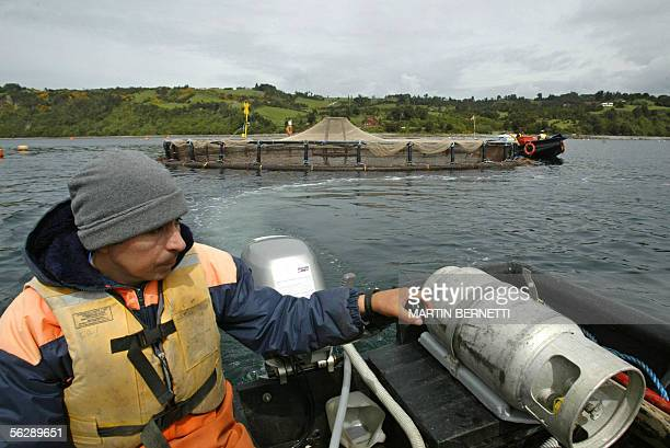 FORUM = A worker returns from inspecting the cilindric fish cages belonging to the seawater salmon farm Marine Harvest in Quillaipe Puerto Montt...