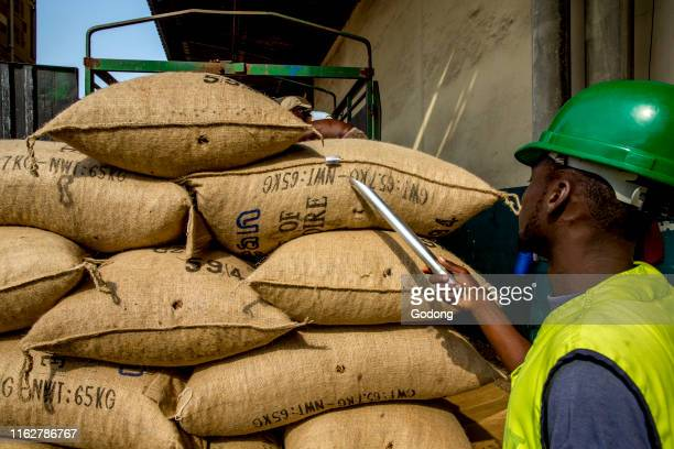 Worker sampling sacks of cocoa at Abidjan port.