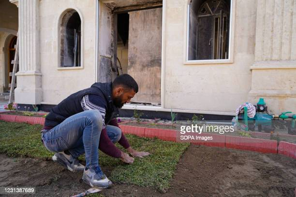 Worker seen planting grass at the Grand Immaculate Church garden days before the Pope's historic visit to Iraq. The town of Qaraqosh, 30 kilometres...